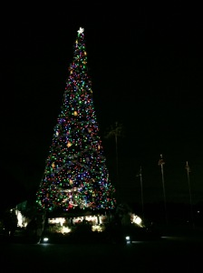 The tree when we left the park